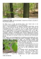 162 KB – Lebensraum Wald  (Dirk Ruis-Eckhardt)