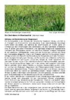 970 KB – Orchideen im Meerbachtal  (Jutta & Manfred Haas)