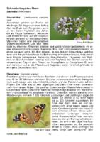 679 KB – Schmetterlinge im Meerbachtal   (Arik Siegel)