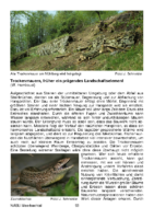 219 KB – Trockenmauern, früher ein prägendes Landschaftselement  (W. Hombeuel)