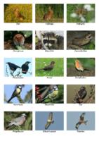 2,04 MB – Bestimmungshilfe für Tier- & Pflanzenarten im Meerbachtal (Jürgen Schneider)