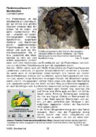 263 KB – Die Fledermausfauna im Meerbachtal  (G. Eppler)