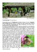 200 KB – Unser Hummelprojekt (Thomas Alpers)