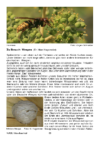 139 KB – Wespen im Meerbachtal (Dr. Marc Hagemeier)
